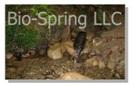 Bio-Spring